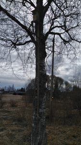 Pönttö puussa